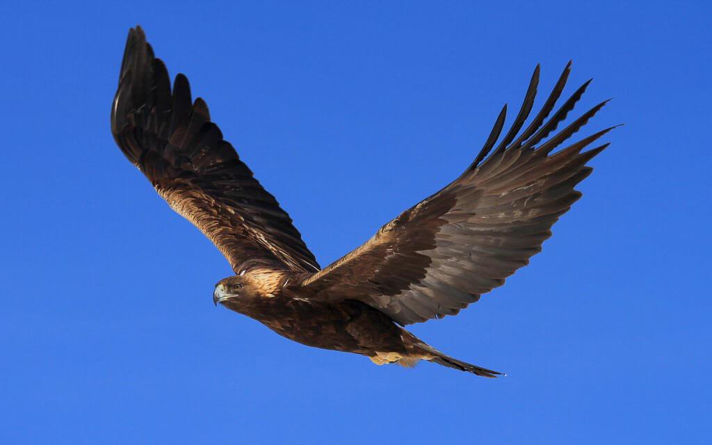 Metafora vulturului